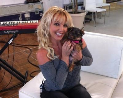 Britney štěně