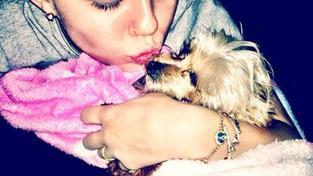 Miley_s_jorksirkou)