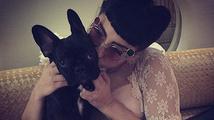 Pes Lady Gaga má vlastní účty na sociálních sítích
