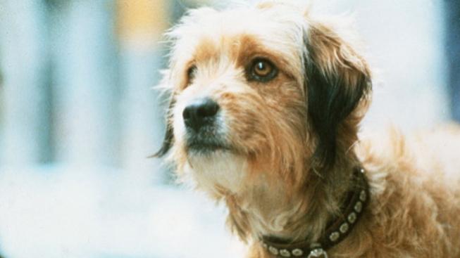 Pes Higgins jako Benji (1974)