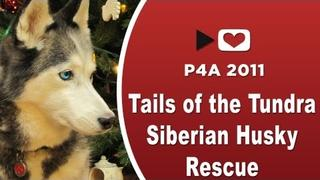 #P4A2011 Tails of the Tundra Siberian Husky Rescue - Project for Awesome 2011 p4a 2011