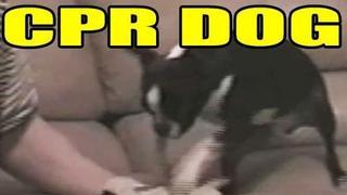 CPR DOG!