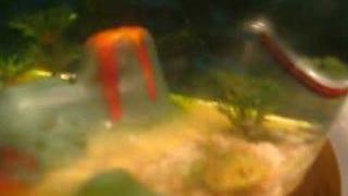 Meet Hector: Our Pet Aquasaur