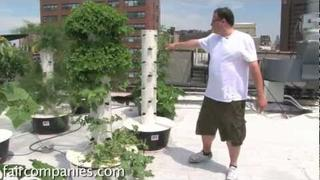 Soil-less sky farming: rooftop hydroponics on NYC restaurant