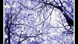 String Quartet - Wonderwall (Tribute to Oasis)