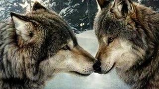 The Joy of Wolves (Vangelis)