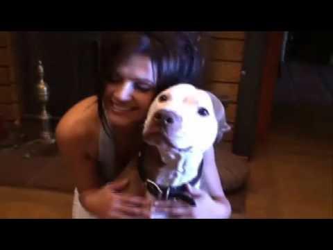 Pitbull Beauty Love Animal Denise Milani