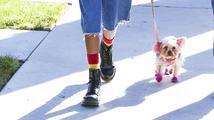 Šílené: Willow Smith obarvila psa na růžovo