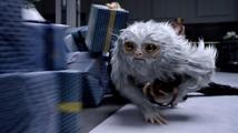 Filmové premiéry: Fantastická zvířata a Tom Hanks v roli amerického obchodníka