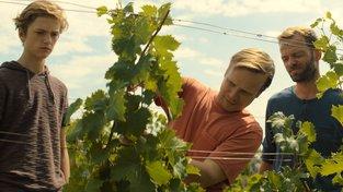 Filmové premiéry: Nová vinařská dobrodružství a podivná náboženská sekta