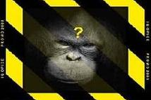 IQ Opice