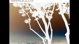Abandoned Pools - Marigolds