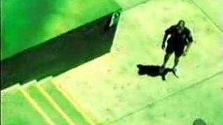 Bam Margera Go Skateboarding