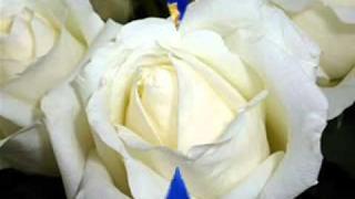 Bílé růže z Athen Eva Dvořáčková