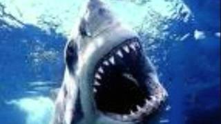 Billy The Themepark Shark~ The Arrogant Worms