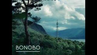 Bonobo - Animals