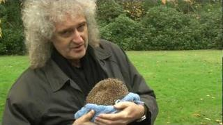 Brian May talks about Percy the Hedgehog's ordeal