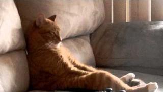 Cat Watching Slayer