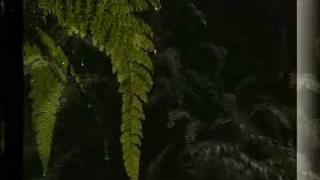 Demis Roussos - Señora
