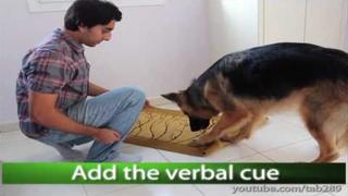 "Dog Trick Tutorial: ""Clean Your Paws!"""