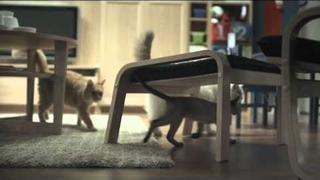 Happy Inside - IKEA cats advert