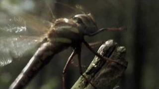 HEAVEN SHALL BURN - Bildersturm Trailer