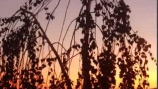 Honza Nedvěd - KOHOUT