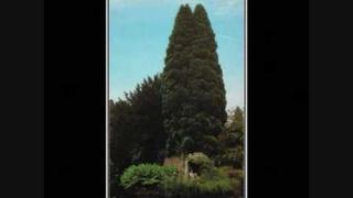 John Foxx The Garden