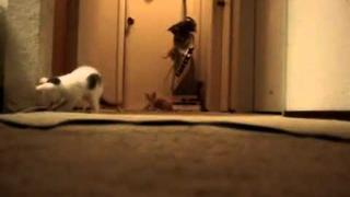 Kittens Have Turn On a Vacuum Cleaner (Original)