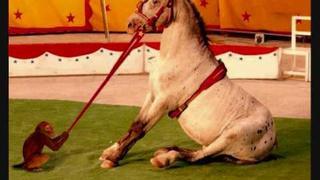 Marika Gombitová-cirkusový koň