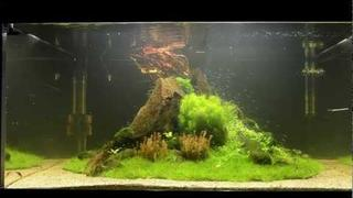 """Nature's Chaos"" Aquascape by James Findley - The Making Of"