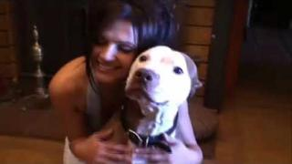 Pitbull Beauty Love Animal Denise Milani
