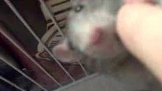 Rats In My Room