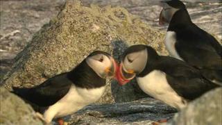 Seabird Success Story