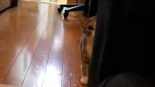 Stalking Cat - Cat Sneaks up on the camera