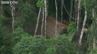 Uncontacted Tribe - Human Planet: Jungles - BBC One