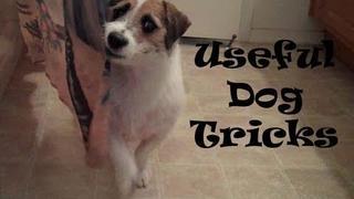 Useful Dog Tricks performed by Jesse