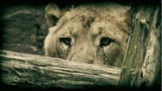 Xavier Naidoo - Verschieden (Official Video)